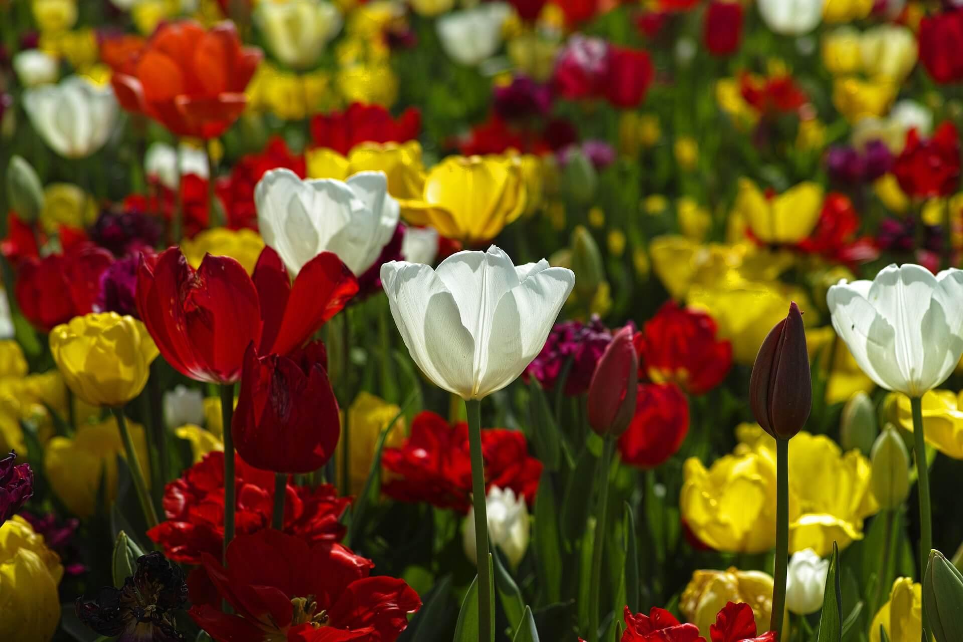 Piękny ogród dla każdego